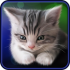 Sleepy Kitten Live Wallpaper
