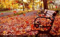 Autumn Live Wallpaper for PC