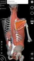 Muscle | Skeleton - 3D Anatomy for PC