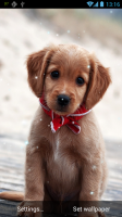 Puppy Live Wallpaper for PC