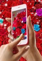 Rose live wallpaper for PC