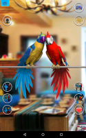 Talking Parrot Couple Free APK