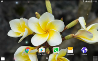 Tropical Flower Live Wallpaper for PC