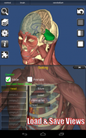 3D Bones and Organs (Anatomy) for PC