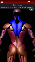 Muscular System 3D (anatomy) for PC