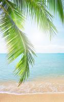 Tropical Beach Live Wallpaper for PC