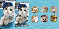 Cat theme-Cute,Adorable,Lazy for PC