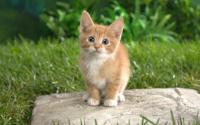 Cat Kittens Live Wallpaper for PC